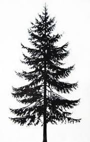 image result for pine tree tattoos tattoos pine