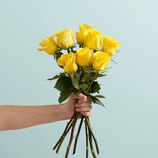 yellow roses with tips care tips proflowers