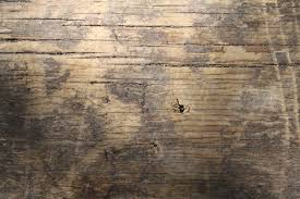 Wooden Table Background Vector Wooden Texture Moncler Factory Outlets Com
