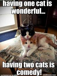 Random Cat Meme - random cat dump album on imgur