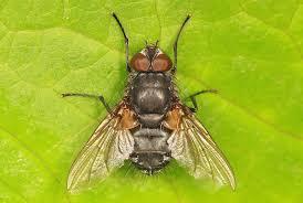 Flies In Backyard Eliminate Drain Flies Indoors And Outside