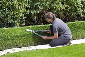 English Box Topiary - free photo box hedge topiary shears gardener free image on