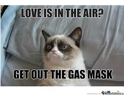 Grumpy Cat Meme Love - love is in the air by irvinredfield meme center