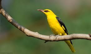 top 25 wild bird photographs of the week 64