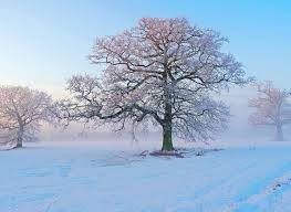 winter season wallpapers one hd wallpaper pictures backgrounds