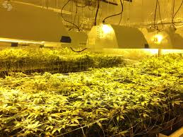 How Far Away Should Marijuana how high should your grow lights be above your plants growace