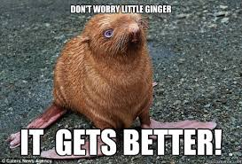 It Gets Better Meme - don t worry little ginger it gets better ginger seal meme