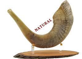 buy shofar horn buy ram s horn shofar large proshofar