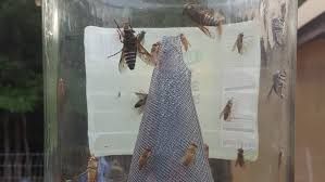 Getting Rid Of Flies In Backyard Horse Flies How To Get Rid Of Flies No Chemicals No
