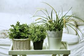 une plante dans une chambre 5 plantes à mettre dans la chambre pour trouver le sommeil