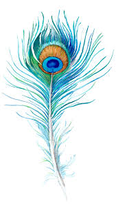 how to draw a peacock feather u2014 simplified peacock feathers