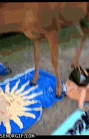 Oh Deer Meme - oh deer gifs watch download on gifer