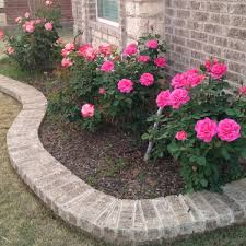 In Front Yard - lauren wants pink rose bushes in the front yard for the house