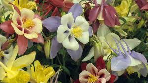 beautiful flower gardens 494314 walldevil