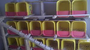 recycled cat litter boxes turned into chicken nesting boxes