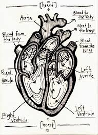 Anatomy Of Human Heart Pdf The 25 Best Human Heart Diagram Ideas On Pinterest Diagram Of