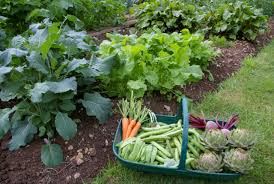 fresh vegetables from home vegetable garden png hi res 720p hd