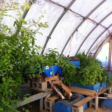 aquaponic farming system grow your own food worldwide aquaculture