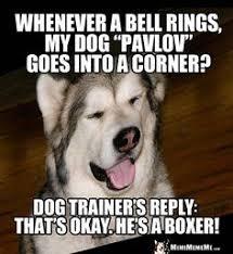 Dog Jokes Meme - dog joke q how does a sled dog make antifreeze a he takes her