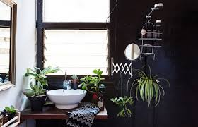 plants that grow in dark rooms plants add light in dark homes feng shui interior design the tao