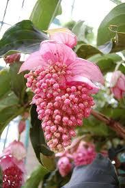 534 best tropical flowers images on pinterest plants tropical