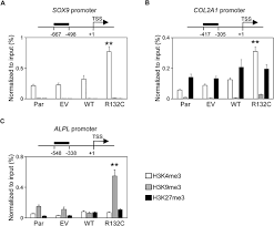 modification si e social association mutant idh1 dysregulates the differentiation of mesenchymal stem