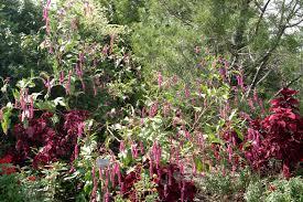powell gardens u0027 blog floral treasures after a lush season