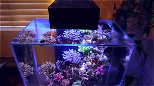 how to setup a nano reef mad hatter u0027s reef