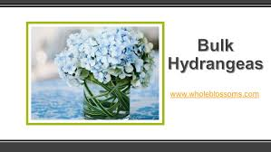 Bulk Hydrangeas Are You Looking To Buy Bulk Hydrangeas For Your Special Event Buy