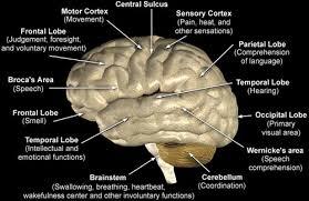 Role Of Brain Stem Anatomy Of The Brain Internet Stroke Center