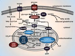 mitochondrial functions in mood disorders intechopen