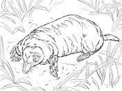 moles coloring pages free coloring pages