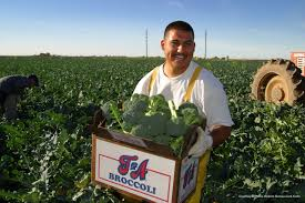 yuma county america u0027s winter vegetable capital the arizona