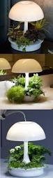 light your space grow plants u0026 experience nature all year long