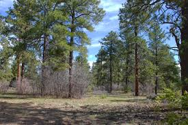 durango co vacant land for sale buy durango