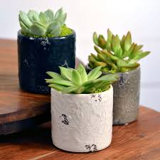 succulent gift in distressed dolomite mulit pack for sale at jp