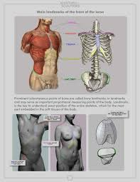 The Human Anatomy Muscles 280 Best Anatomy 4 Sculptors Images On Pinterest Human Anatomy