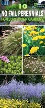 best 25 low water landscaping ideas on pinterest xeriscaping