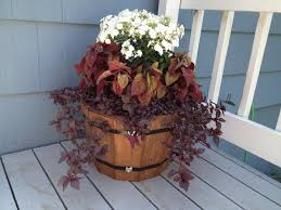 the 25 best whiskey barrel planter ideas on pinterest container
