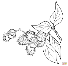 rambutan branch coloring page free printable coloring pages