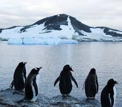 imagenes de la antartida la antártida era un continente verde el nuevo día