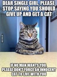 Meme Chat - 10 bonnes raisons de vivre avec un chat plutôt qu avec un gars