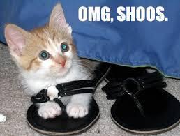 Omg Cat Meme - omg shoos cat meme cat planet cat planet
