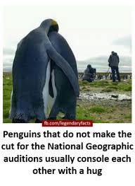 Penguin Birthday Meme - 25 best memes about penguin penguin memes