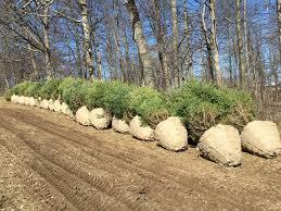 100 christmas tree baler used used mchale v640 round baler