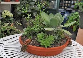 planter for succulents succulent planters idea book drought tolerant planters succulents