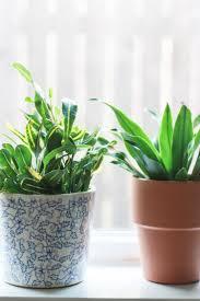 houseplants 101 how to keep houseplants alive and happy