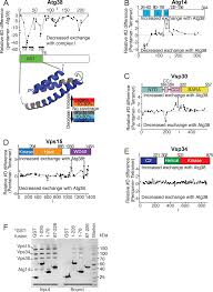 characterization of atg38 and nrbf2 a fifth subunit of the