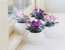 easy flowers to grow indoors top 8 easy care flowering houseplants
