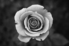 free black and white photography pexels free stock photos